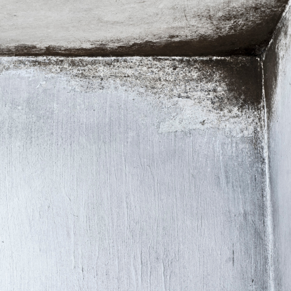 9 Ways to Identify, Prevent, and Remove Mold