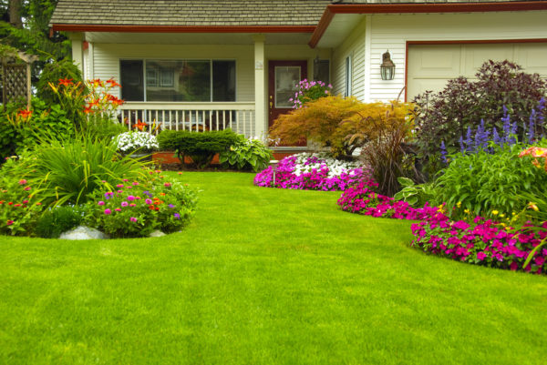 Landscaping Tricks to Save Energy in Your Home